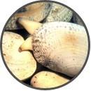 Comprar Almejas online| Marisco Gourmet